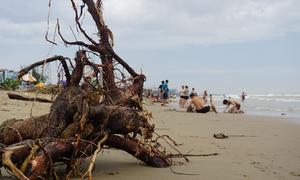 Bờ biển Sầm Sơn ngập củi lụt, rều rác