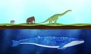 Quá trình biến cá voi thành động vật lớn nhất hành tinh