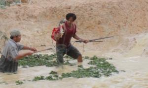 Cá tràn ra suối sau vỡ đập, người dân kích điện vây bắt
