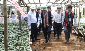 Thủ tướng thăm vườn sâm Ngọc Linh lớn nhất Việt Nam