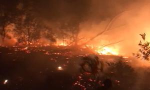 Cháy hàng trăm ha rừng phòng hộ ven biển Quảng Bình