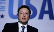 Elon Musk gọi thợ lặn cứu đội Lợn Hoang là 'kẻ hiếp dâm trẻ em'