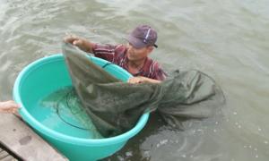 Săn cá linh trong lũ lớn ở miền Tây