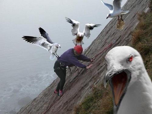 Cuộc nổi loạn của bầy chim.