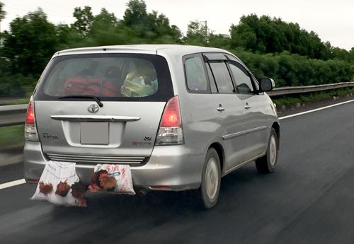 Gà nhốt trong bao, buộc bên ngoài ôtô trên đường cao tốc Pháp Vân - Ninh Bình.