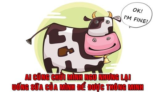 Tại sao con người uống sữa bò để thông minh?