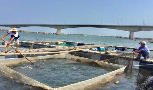Người dân nuôi cá trên vùng cửa sông Chà Và (Bà Rịa - Vũng Tàu). Ảnh: TD.