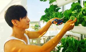 5 vườn rau xanh mướt của các nghệ sĩ Sài Gòn