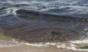 Thủy triều đỏ tấn công các bãi tắm vùng biển Kê Gà