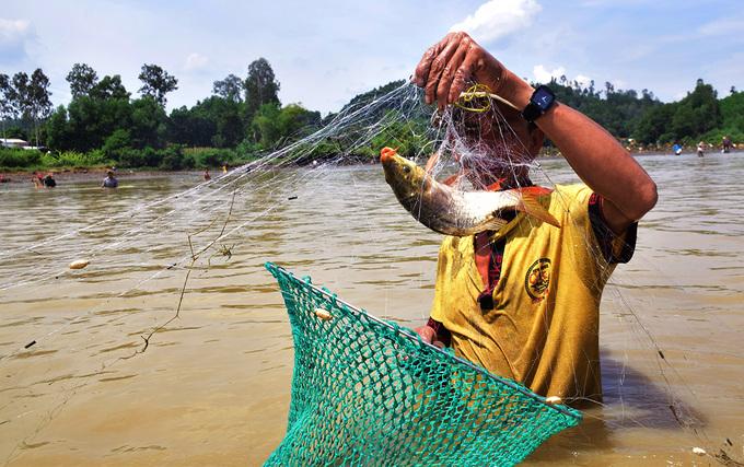 Người dân Quảng Nam tháo đập nước bắt cá