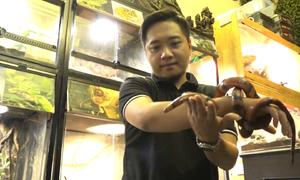 Chàng trai Hà Nội sở hữu 30 loài rắn nhập từ Bắc Mỹ
