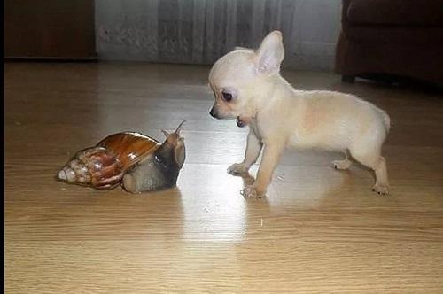 Cuộc đối đầu căng thẳng giữa chó và ốc sên.