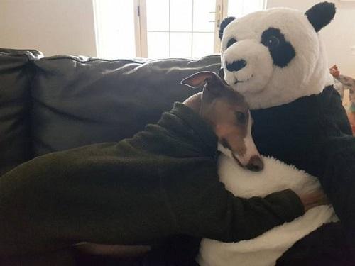 Ai cũng cần có gấu.