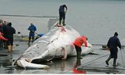 NgÆ°á»i Nhật vẫn Än thá»t cá voi và ngÆ°á»i Ấn không cấm ta Än thá»t bò