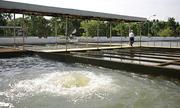Đà Nẵng 'xin' nước thuỷ điện để đẩy mặn