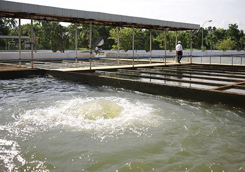 Bể lắng tại nhà máy nước Cầu Đỏ lượng nước sản xuất ra đang thấp hơn thời điểm trước 30/8. Ảnh: Nguyễn Đông.