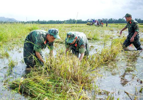 Bộ đội giúp dân đầu nguồn tỉnh An Giang thu hoạch lúa chạy lũ. Ảnh: Thế Hiển.