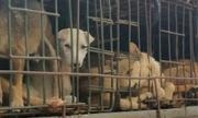 Chuyên gia xã hội học: 'Người dân khó bỏ thói quen ăn thịt chó'