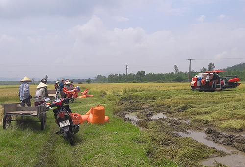 Chiếc máy gặt duy nhất trên các đồng lúa ở xã Kỳ Xuân. Ảnh: Đức Hùng