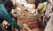 Gỗ quý giấu trong 4 container giấy phế liệu nhập khẩu