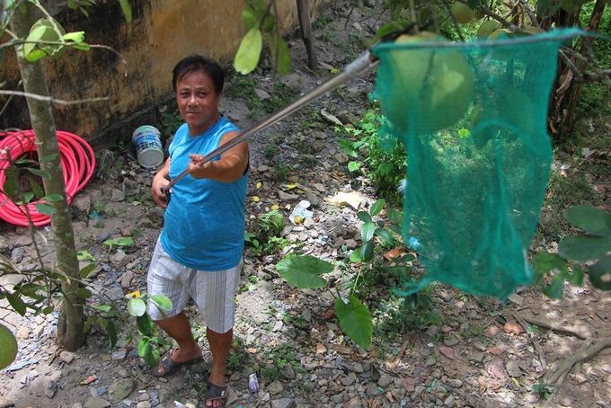 Người dân Huế vào mùa thu hoạch thanh trà