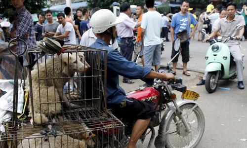 Những chú chó sắp bị giết thịt ở lễ hội Ngọc Lâm. Ảnh: Reuters.