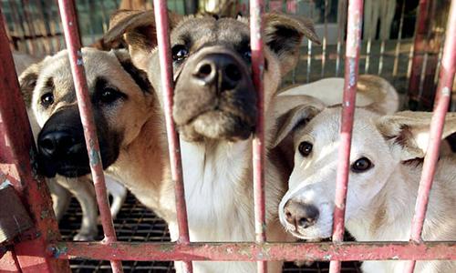 Những con chó tại một chợ chó Hàn Quốc. Ảnh: Reuters