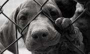 Lệnh cấm giết, bán thịt chó tại một số nơi trên thế giới