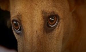 Thói quen ăn thịt chó ở Việt Nam