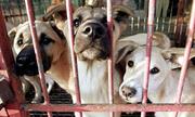 Ngành thịt chó Hàn Quốc lao đao trước sự tẩy chay của giới trẻ