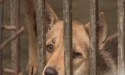 Người ăn thịt chó đối diện nhiều rủi ro