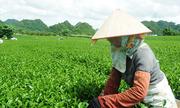 Việt Nam sẽ xây dựng tiêu chuẩn nông nghiệp hữu cơ cho sản phẩm chủ lực