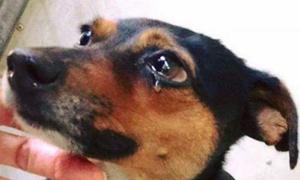 'Ăn thịt chó không phải nét văn hóa mà là thói quen xấu'