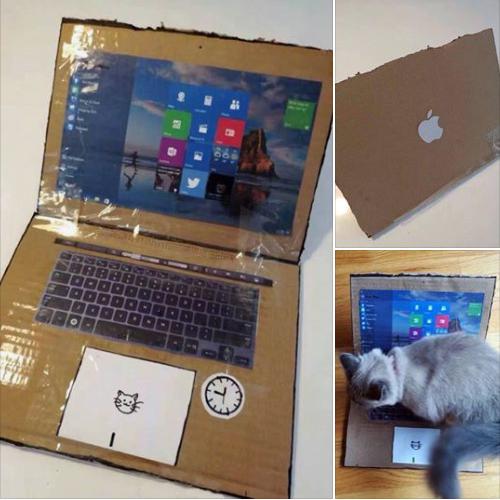 Laptop hiệu con mèo.