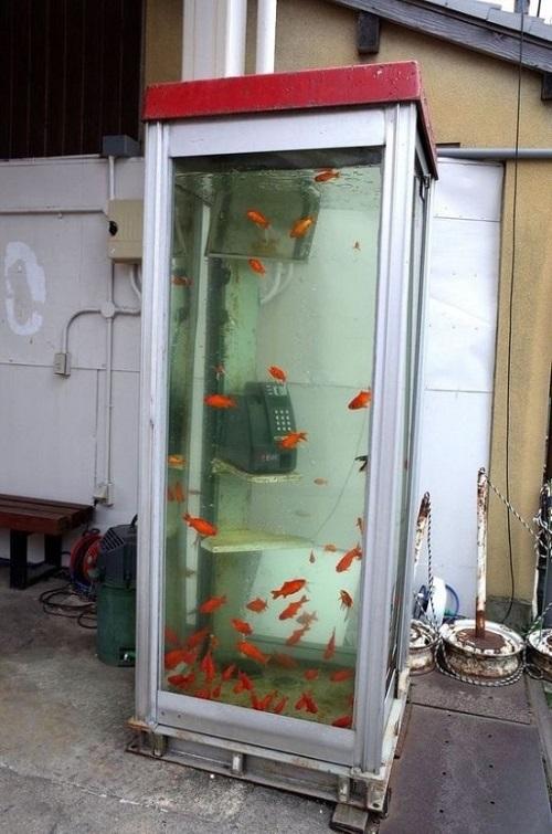 Bể cá công cộng.