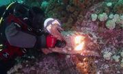 Bạch tuộc 'cướp' máy quay của thợ lặn dưới biển