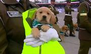 Cuộc diễu hành của 'tân binh cún' trong lực lượng vũ trang Chile
