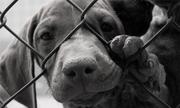 Hàng loạt quán thịt chó ở trung tâm Sài Gòn bị kiểm tra