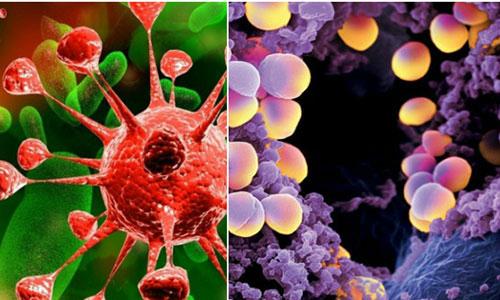 Visus tồn tại và gây bệnh cho con người theo cơ chế nào?