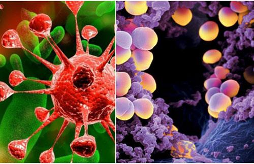 Virus, vi khuẩn luôn là mầm bệnh đáng sợ cho con người. Ảnh minh họa.