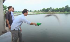 Bỏ lúa, nông dân Hải Dương thu nhập cao từ đào ao thả cá