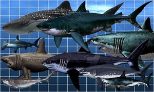 15 loài cá mập lớn nhất từng tồn tại