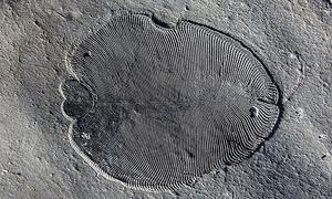 Phát hiện hóa thạch động vật cổ nhất