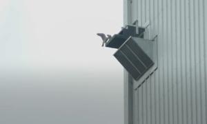Tổ chim cắt trên độ cao 30 mét ở nhà máy hóa chất