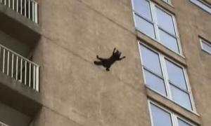 Gấu mèo tiếp đất lành lặn khi rơi từ tầng 9 chung cư