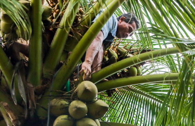 Người đàn ông mù hái dừa, bắt cá nuôi cả gia đình