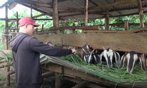 Chàng K'Ho bỏ việc trên phố về làm 'nông nghiệp thuận tự nhiên'
