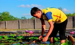 8x kiếm hàng trăm triệu đồng từ vườn hoa súng Thái Lan