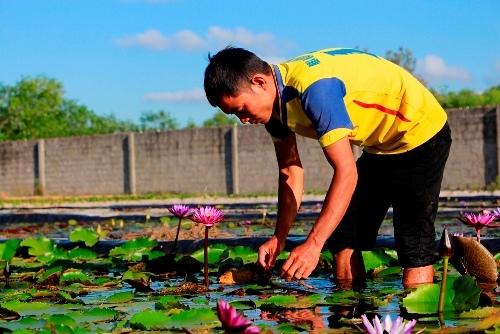 [Video] 8x kiếm hàng trăm triệu đồng từ vườn hoa súng Thái Lan
