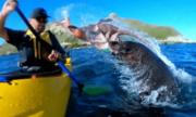 Người chèo thuyền New Zealand bị hải cẩu ném bạch tuộc vào mặt